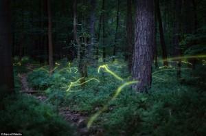 Fireflies2